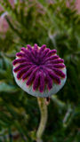 Fleur, jardin dans le printemps de la Slovénie Photographie stock