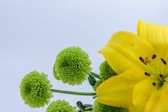 Fleur jaune à côté des fleurs vertes rondes intéressantes Photos stock