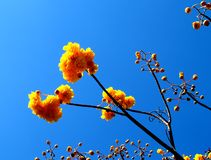 Fleur jaune 02 Photographie stock