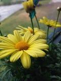 Fleur jaune Image stock