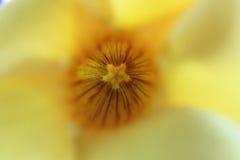 fleur jaune abstraite Image libre de droits