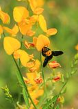 Fleur jaune avec l'abeille Image stock
