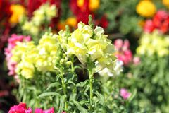 Fleur jaune avec le fond brouillé image stock