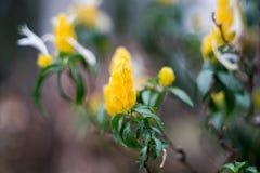 Fleur jaune avec le fond de tache floue Photos libres de droits