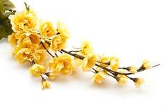 Fleur jaune avec les feuilles vertes Images libres de droits