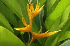 Fleur jaune colorée Photos libres de droits