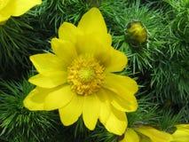 Fleur jaune colorée sur un fond vert Image stock