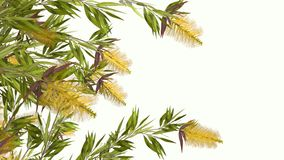 Fleur jaune 3D Image stock