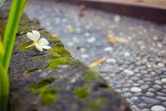 Fleur jaune d'isolement sur le fond blanc Photo stock
