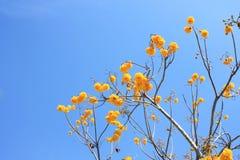 Fleur jaune d'isolement sur le fond de ciel bleu Photographie stock libre de droits