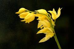 Fleur jaune d'orchidée Photo stock