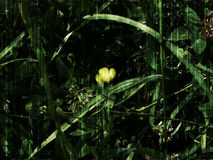 Fleur jaune dans l'herbe verte Photo libre de droits