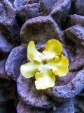 Fleur jaune dans la sculpture en pierre en fleur Image stock