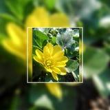 Fleur jaune dans le cadre photos libres de droits