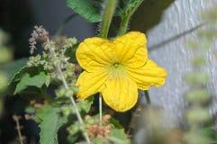 Fleur jaune dans le jardin images libres de droits