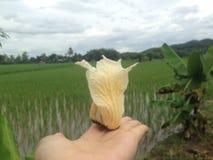 Fleur jaune dans ma main dans une ferme Photos libres de droits