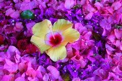 Fleur jaune dans un lit des fleurs pourpres et roses Photo stock