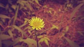 Fleur jaune de beauté dans le style de vintage Images stock
