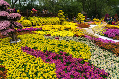 Fleur jaune de chrysanthème Photos stock