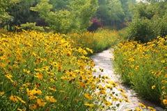 Fleur jaune de cosmos près de sentier piéton Photos stock