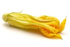 Fleur jaune de courgette images libres de droits