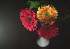 Fleur jaune de deux rouges un Photo libre de droits