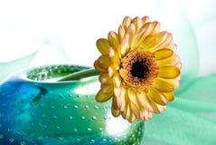 Fleur jaune de Margarita Photos libres de droits