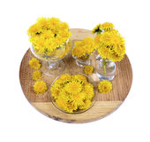 Fleur jaune de pissenlit Image libre de droits