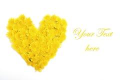 Fleur jaune de pissenlit sur le blanc Images stock