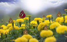 Fleur jaune de souci Image libre de droits