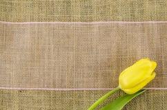 Fleur jaune de tulipe avec le ruban rose sur le fond de toile Photos libres de droits