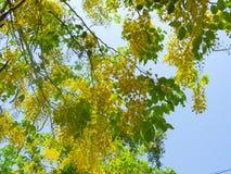 Fleur jaune en été image stock