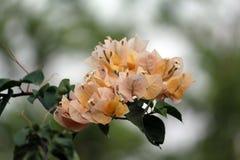 Fleur jaune et blanche de couleur photographie stock libre de droits