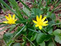 Fleur jaune et feuille verte Photographie stock