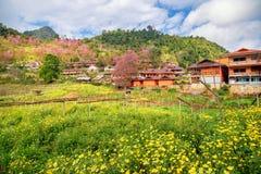 Fleur jaune et fleurs de cerisier roses avec une maison orange Photographie stock