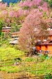 Fleur jaune et fleurs de cerisier roses avec une maison orange dans le doi Image libre de droits