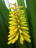 Fleur jaune et verte Images stock