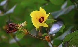 Fleur jaune fleurissant admirablement en automne beauté Photographie stock