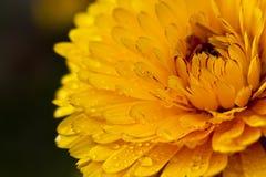 Fleur jaune fraîche Image stock
