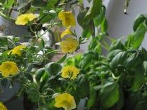 Fleur jaune gentille Photo libre de droits