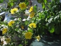 Fleur jaune gentille Images libres de droits
