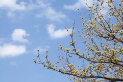 Fleur jaune minuscule avec le fond de ciel bleu photo libre de droits