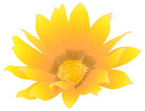 Fleur jaune-orange Photographie stock