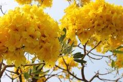 Fleur jaune pendant l'hiver Photo stock