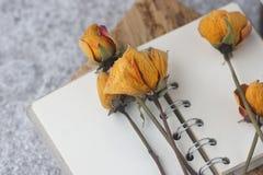 Fleur jaune sèche sur le carnet Photos stock