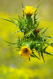 Fleur jaune sauvage image libre de droits