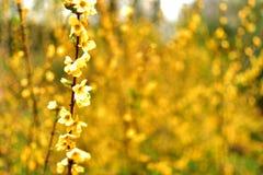 Fleur jaune sauvage fleurie avec le plein fond brouillé photo stock