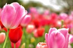 Fleur jaune sauvage fleurie avec le plein fond brouill? image libre de droits