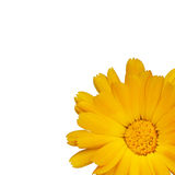 Fleur jaune simple Images stock
