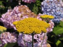 Fleur jaune spéciale Photos libres de droits